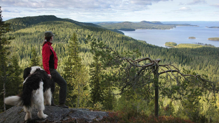 Finland's natural beauty stood it in good stead in the Country Rep Trak rankings. Pictured is Koli National Park in Northern Karelia.