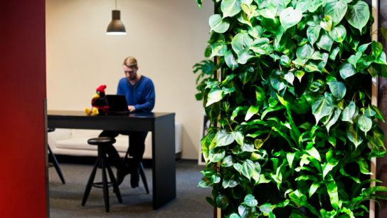 The Naava greenwall's air purification efficiency is equivalent to over 4 000 ordinary houseplants.