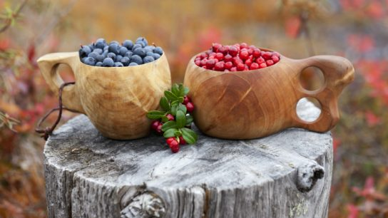 Blueberries and lingonberries are but two of the Nordic superfoods that grow naturally in Finnish Lapland.