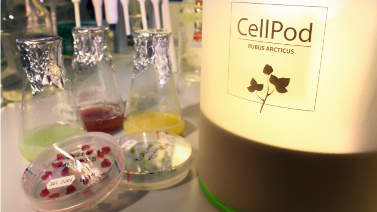 VTT's first CellPod prototype resembles a design lamp and is ideal for keeping on a kitchen table.