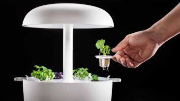 Plantui's focus on hydroponic indoor gardening is paying off.