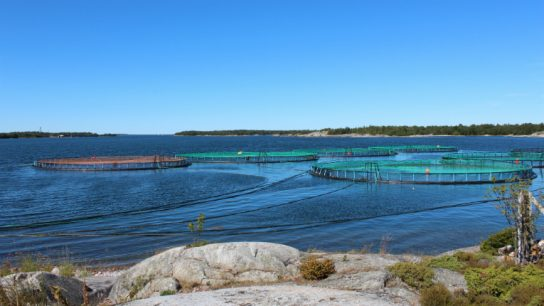 The Slotts Lax Ab family business specialises in raising rainbow trout and has four fish farms in Sweden that produce around 1.2 million kilograms of fish a year.