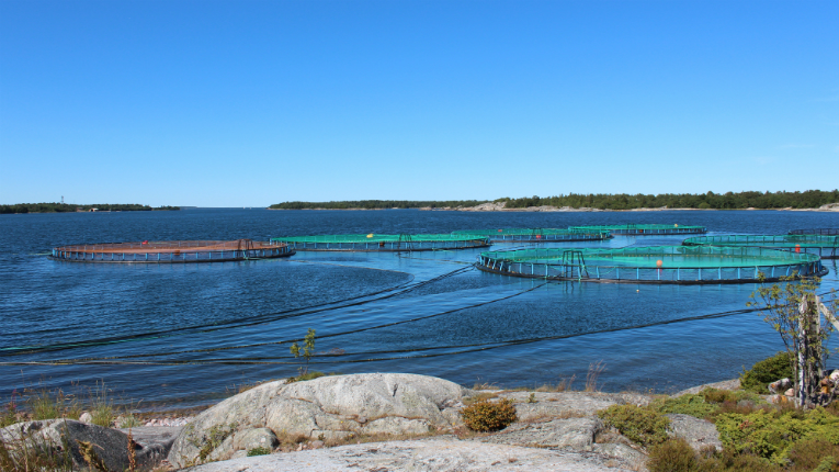 Nordic fish farms in sweden - Trout farming business family mountains ...