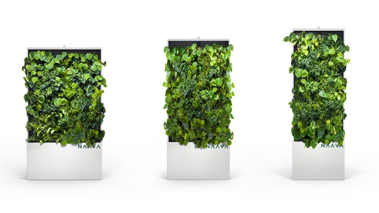 Naava's range of innovative plant walls circulate and purify indooor air.