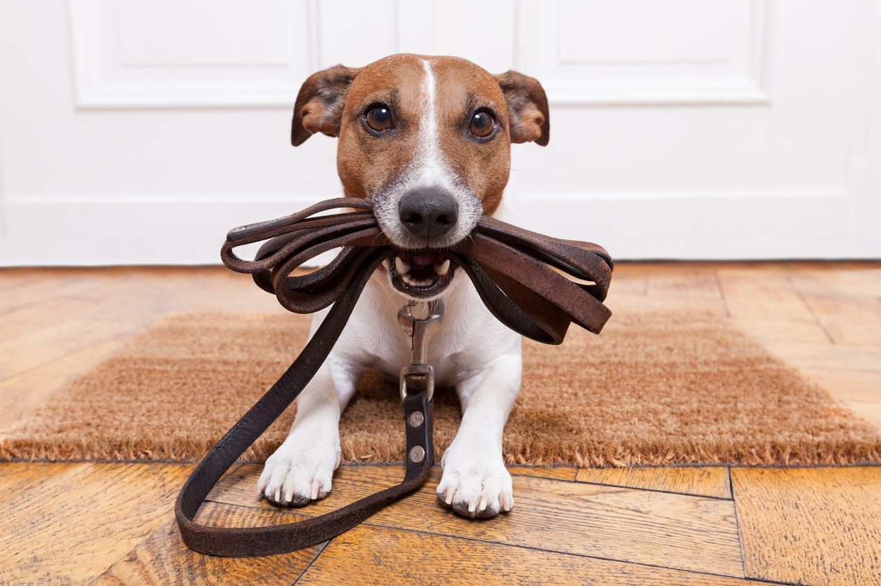 Host My Pet can also be used for regular dog walking, for example during the owner's long working days or illnesses.