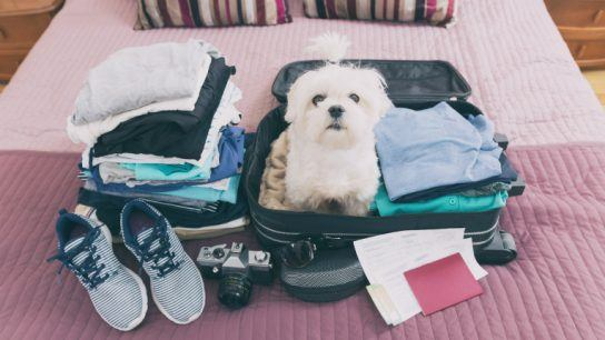 Having a puppy tag along on holiday might sound like fun. If it's too much hassle, Host My Pet wants to help both the animal and its owner.