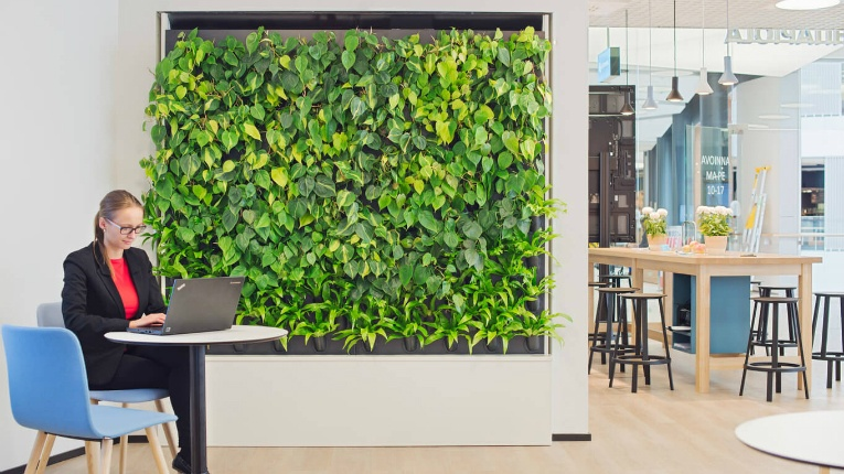 Naava's plant-covered walls naturalise 60 square metres of air and are strategically placed near working desks or in meeting rooms for example.