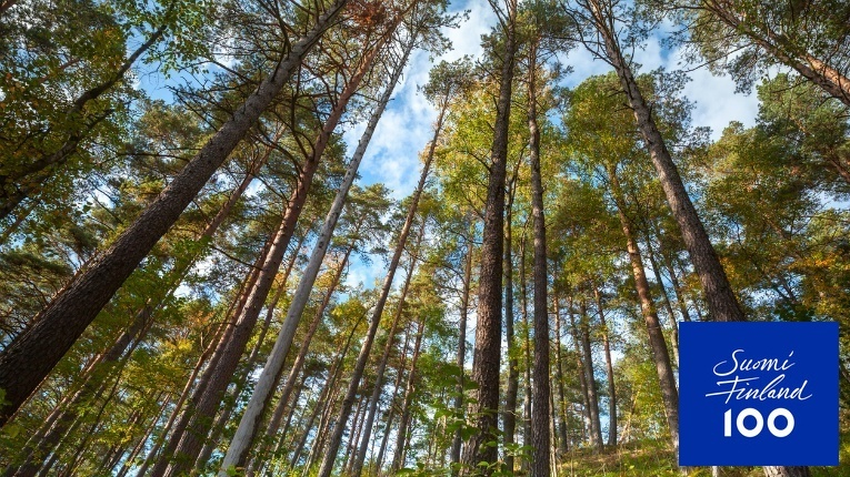 Finland's forests offer a plethora of possibilities for local and international companies.