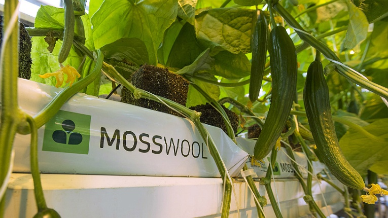 The Natural Resources Institute Finland (LUKE) tested Mosswool for cucumber growing and concluded it can yield about a seven per cent larger crop per plant than stonewool.
