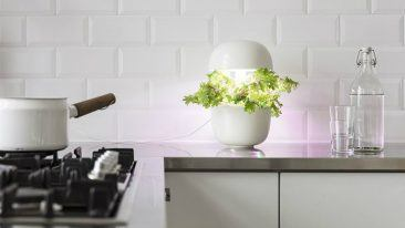 Plantui is set to enter more homes worldwide. The first products under the group's Bosch brand have been launched at the IFA Berlin trade show.