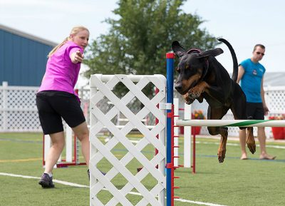 Puppyhood is the best time to train a dog – and OneMind Dogs makes it fun.