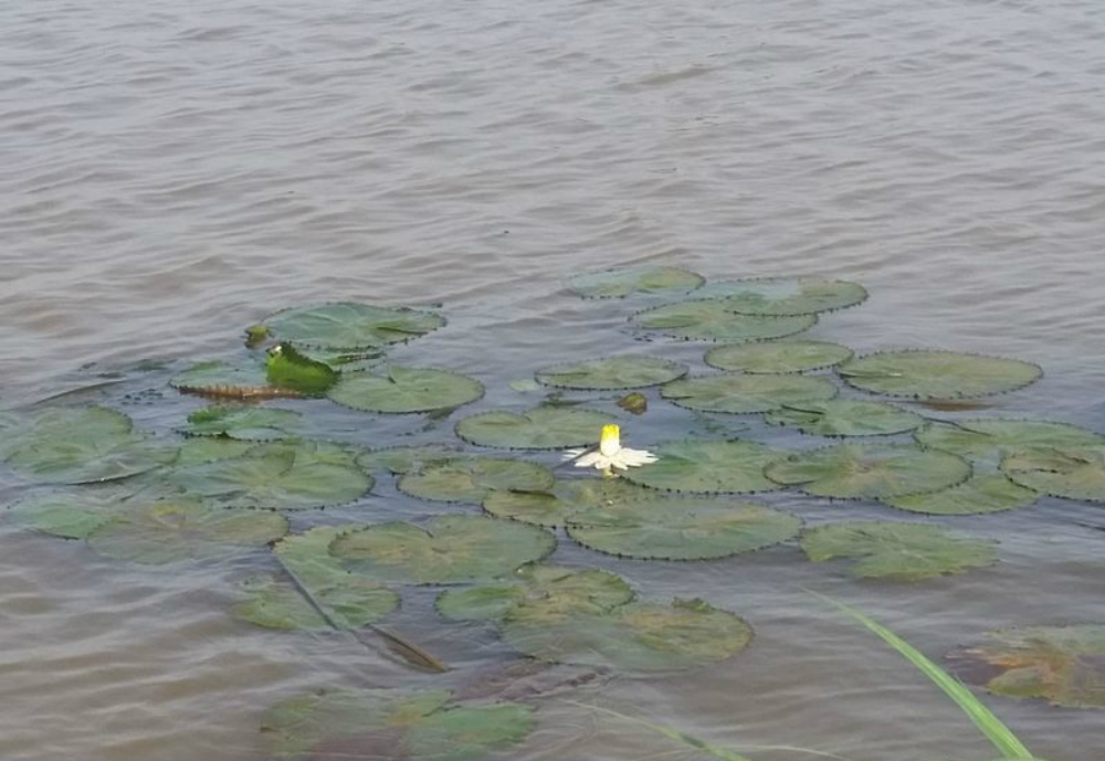 Finnish company Bio-Raiser has signed a letter of intent with Ethiopia's Ministry of Water, Irrigation and Electricity for the clean-up of Lake Tana in the country. The agreement is part of a larger pilot project to restrict the amount of nutrients that end up in the lake from nearby agricultural farms. Bio-Raiser's solutions will