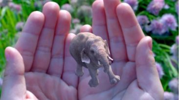 """According to Magic Leap's website, the company has decided to """"rethink the relationship technology has with people"""", and on the side it makes elephants appear in unexpected places."""