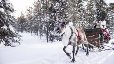 In the Christmas season Finnish Lapland is particularly popular among Brits.