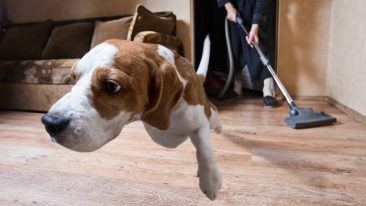 The gel can help improve the wellbeing of dogs affected by noise sensitivity.