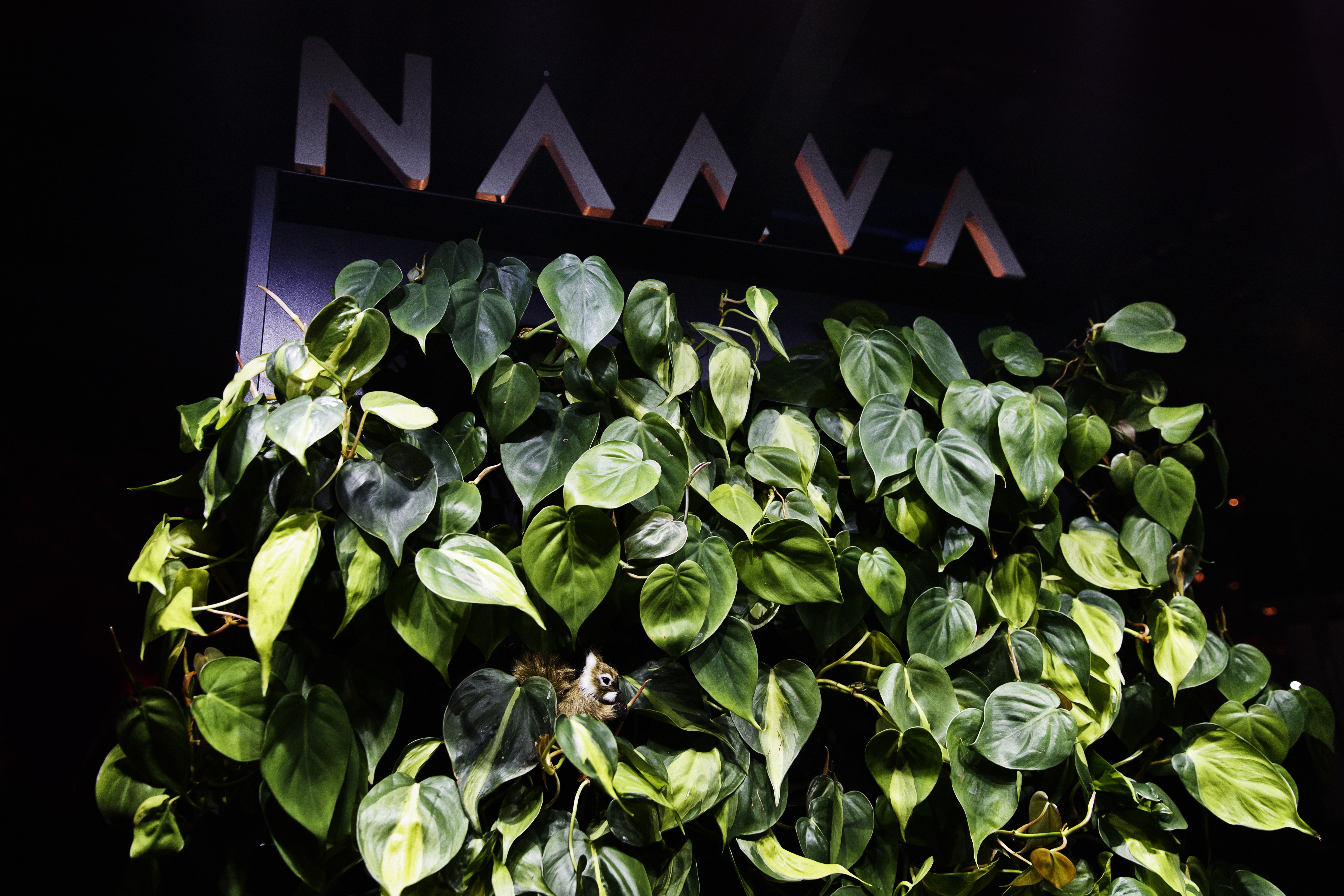 All the buzz making you feel nauseous? Finnish Naava's smart green wall helps Slush-visitors find some fresh air. Can you spot the squirrel?
