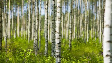 Finland is a global leader in the utilisation of wood-based biomass for energy production.