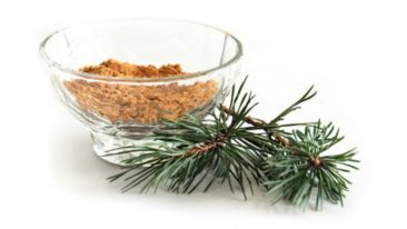 Fingredient draws its pine bark extract from Arctic pines in Finnish Lapland, which will be utilised in a new toothpaste brand launching in Korea.