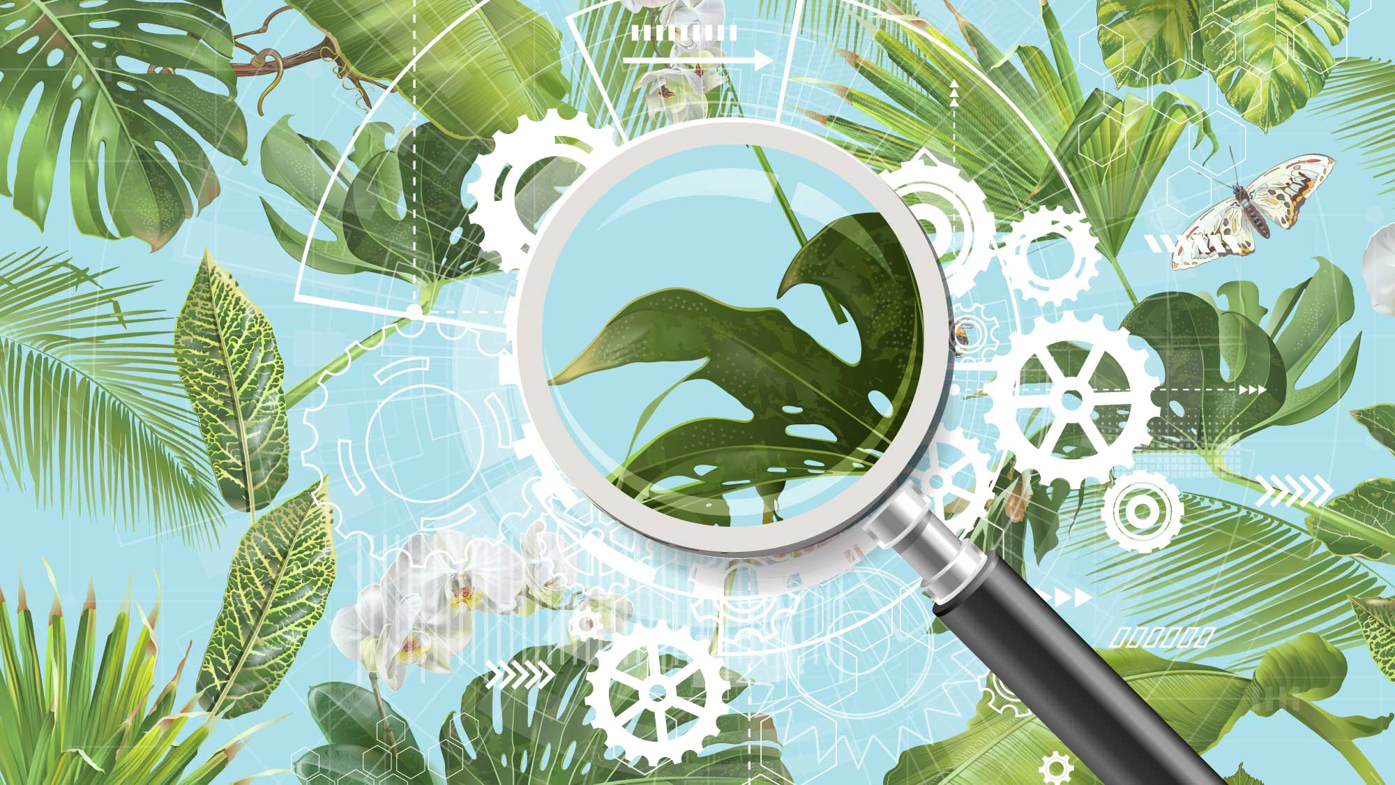 Illustration of magnifying glass and plants