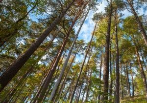 An important target market for Terramonitor has been the forest industry.