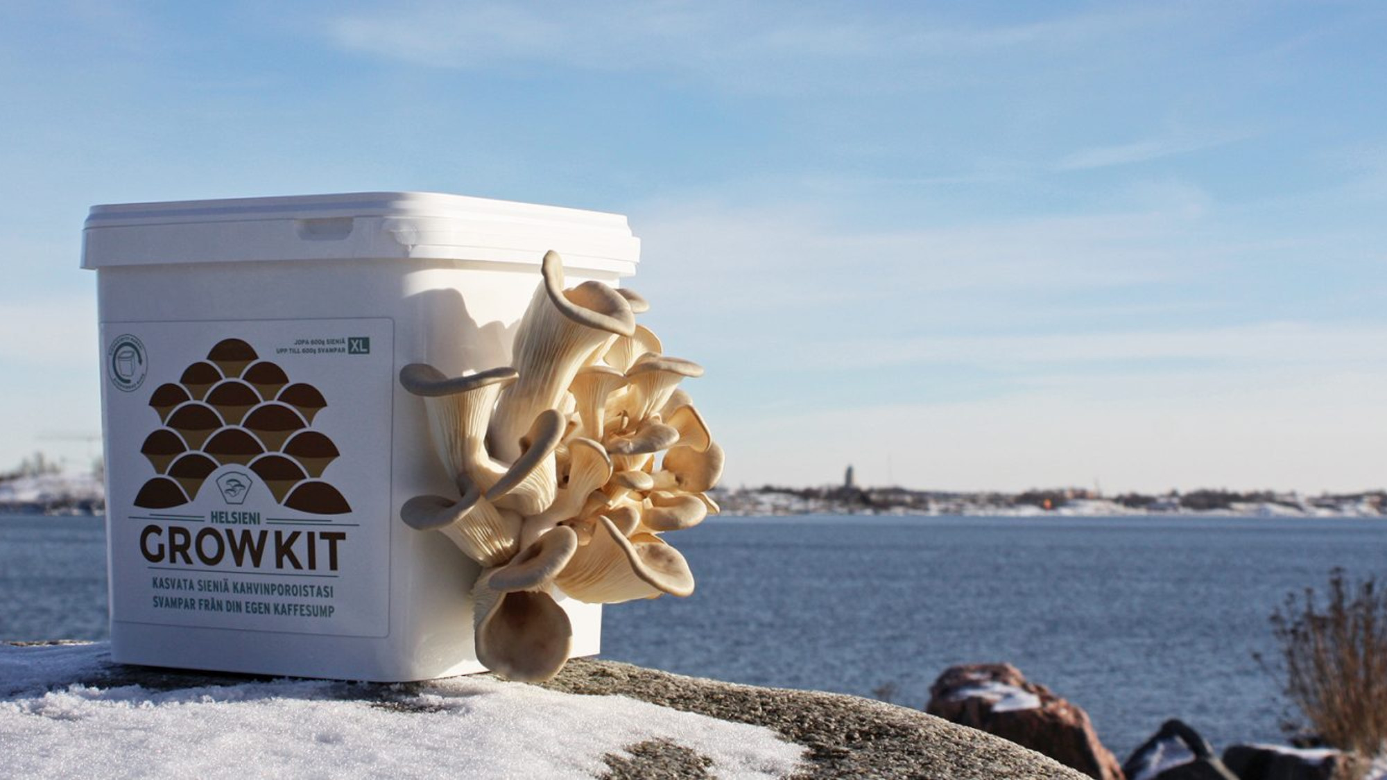 The name Helsieni is a pun: the company is based in Helsinki, and 'sieni' means mushroom in Finnish.