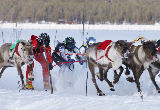 Finland's annual reindeer races culminate in the championship event held in Inari, more than 200 miles north of the Arctic Circle. (Photo: Visit Finland)