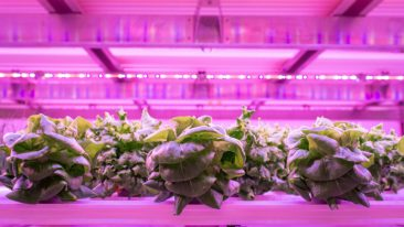 Netled and Ashwood Infrastructure have partnered in the emerging global vertical farming market.