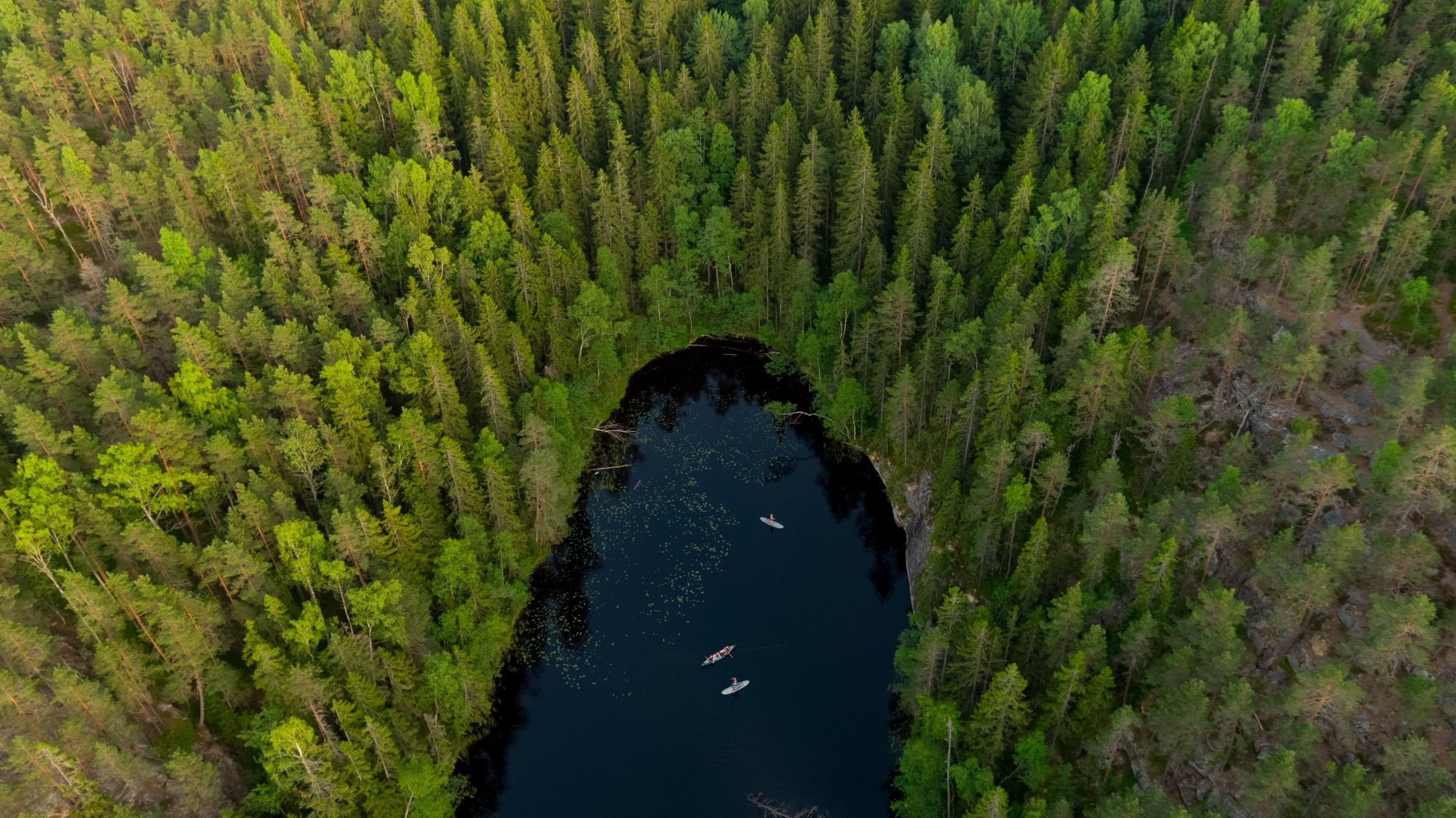 sup boarders in a forest lake