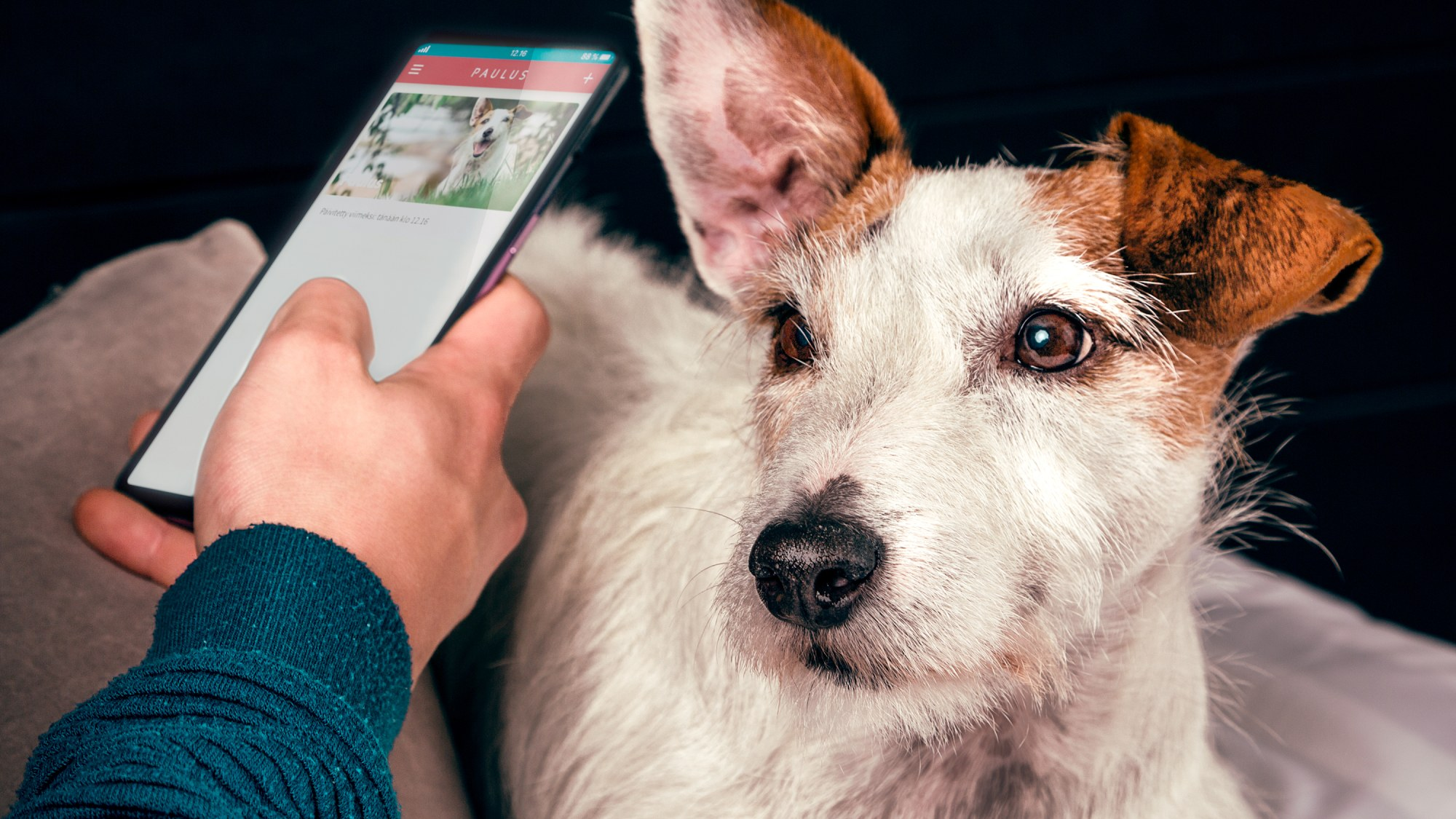 Lost your dog's medical records? Paulus makes them all digital.
