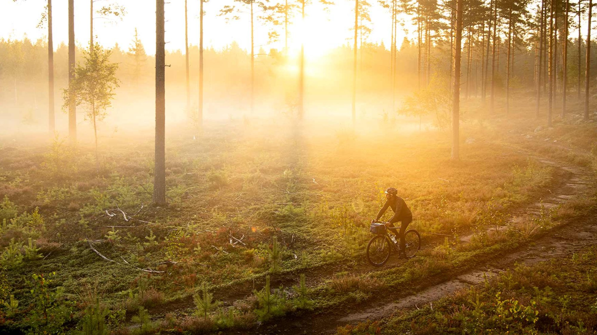 man riding a bike in a forest