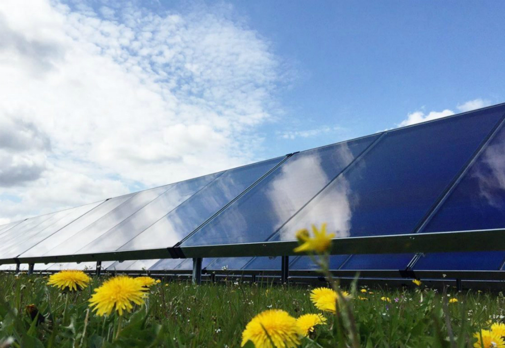 Flowers in front of solar panels