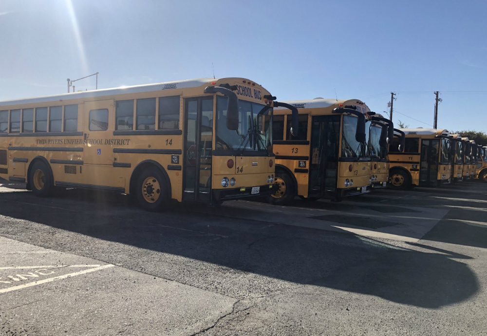 School buses in a row.