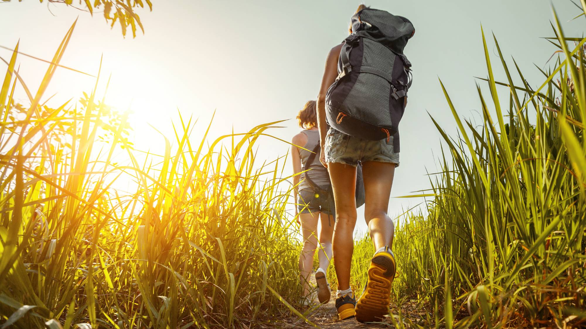 people hiking in tall grass