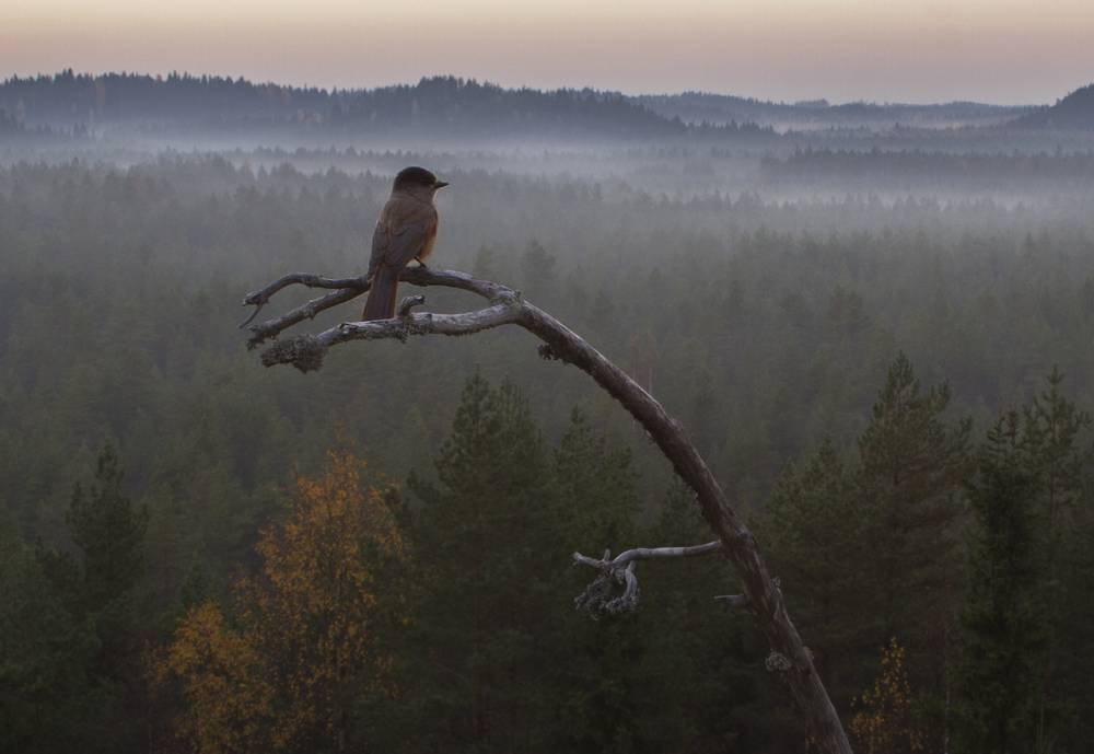 bird looking at the horizon on top of a tree