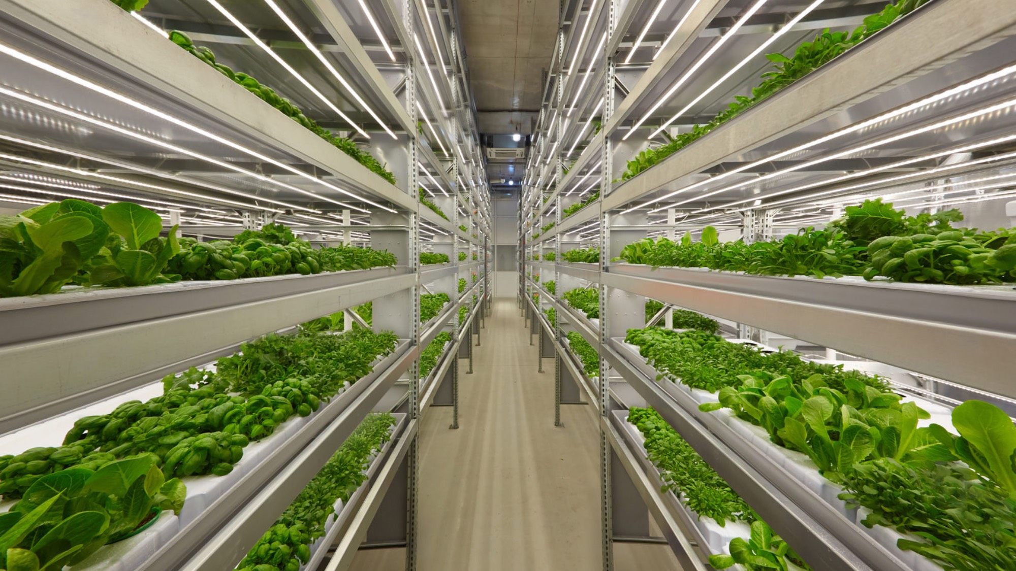 A vertical farm with plants growing on shelves