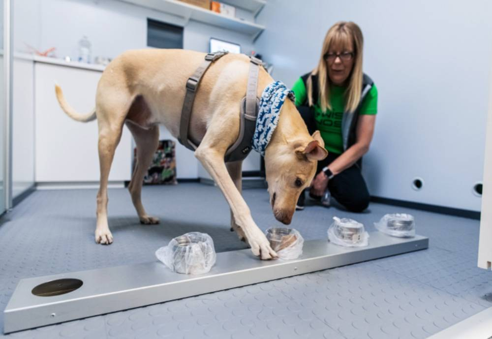 A sniffer dog on duty at Helsinki Airport