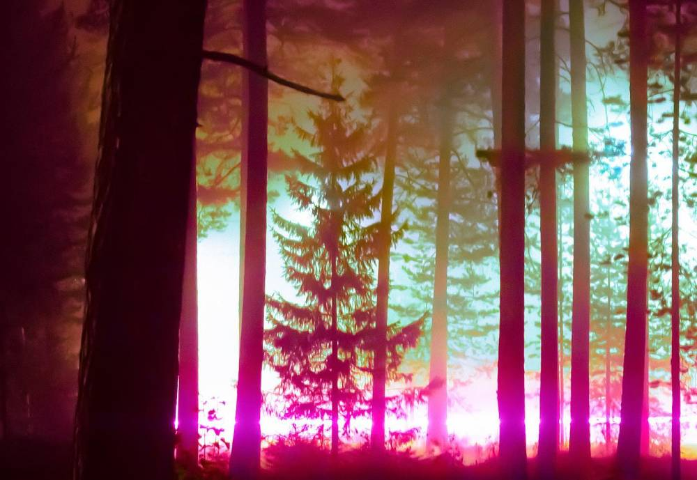 Forest with a purple light on the horizon