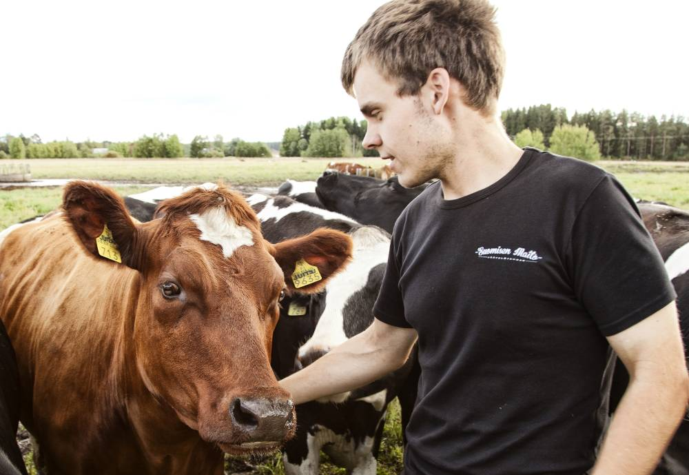 a man and a cow