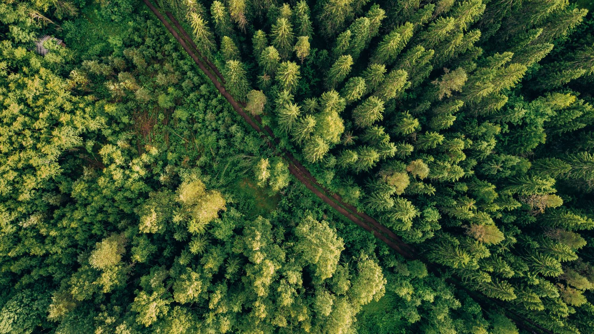 forest overhead