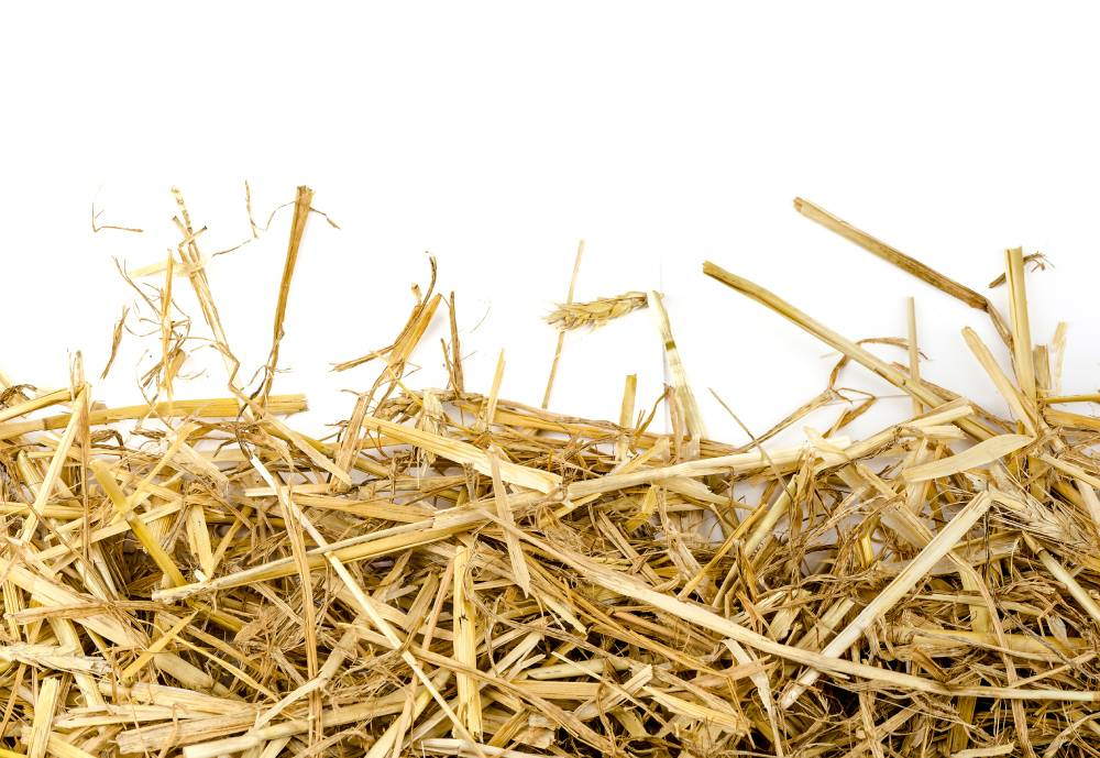 cluster of straw