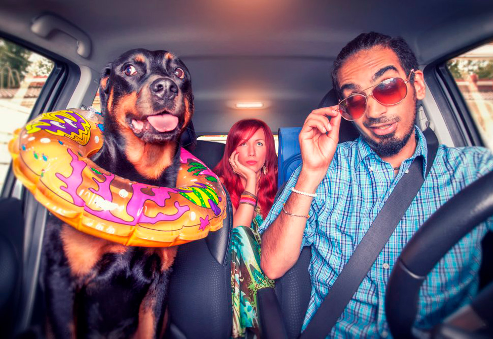Two people and a dog in the car