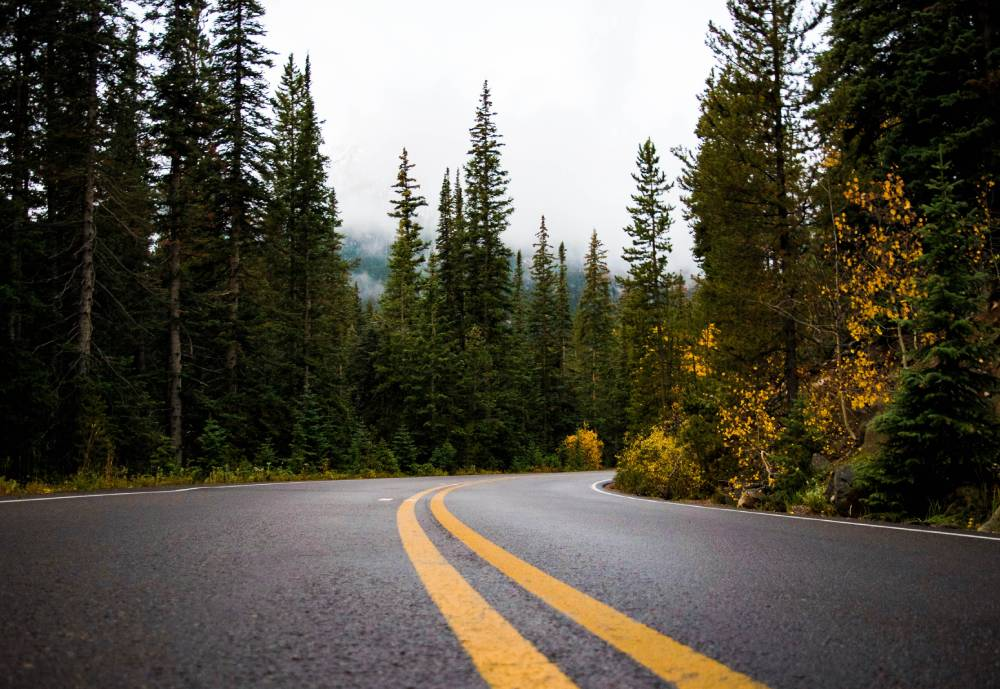 A curve in a road lined with trees.